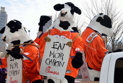 Cow Fleeing the Cops Hides Out at Chick-fil-A