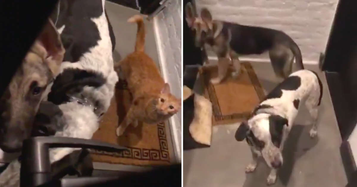 Guy Opens Apartment Door — And Finds Entire Gang Of Animals Outside