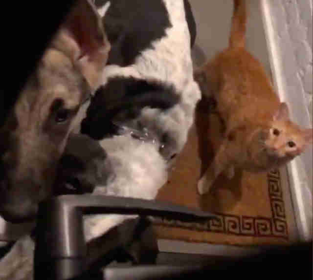 Guy Hears A Knock And Finds Two Dogs And A Cat Outside The Dodo