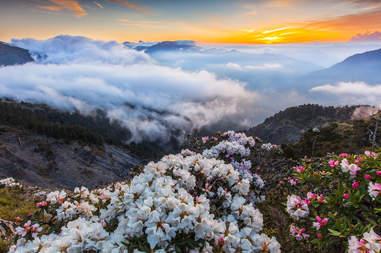 Rhododendron, Taroko National Park, Taiwan