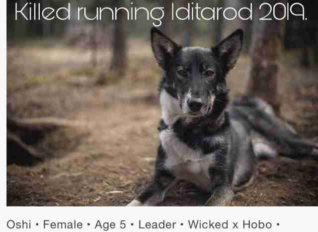 Another Sled Dog Just Died In The Iditarod Race