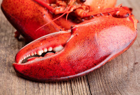 Costco Is Selling Monstrous 3-Pound Lobster Claws in Some Locations