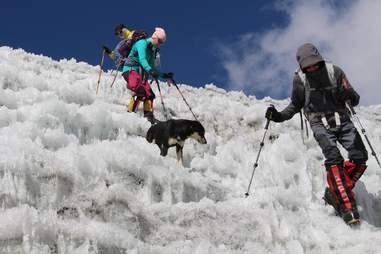 climbing dog