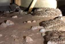 Man Notices 'a Few' Rattlesnakes Under House, Snake Catcher Shows up and Removes 45