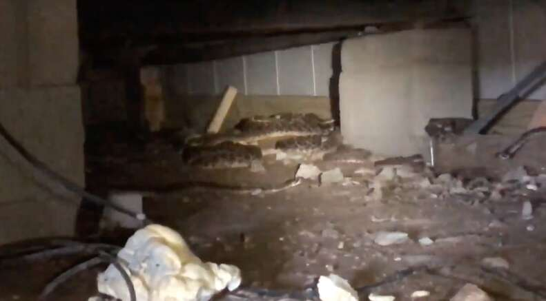 45 snakes found under house