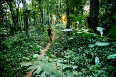Verdant trails and hikes are within arms-reach in Asheville.Verdant trails and hikes are within arms-reach in Asheville.