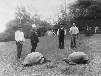 tortoise jonathan