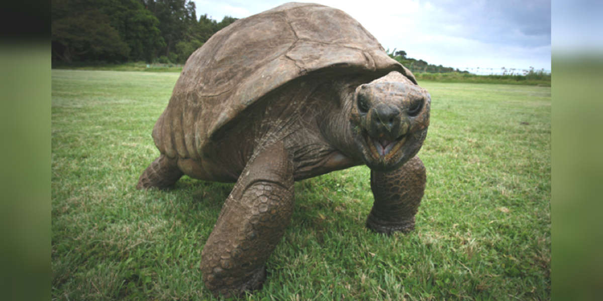 Meet Jonathan, The Oldest-Known Animal In The World