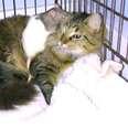 Rescue cat snuggling a rat