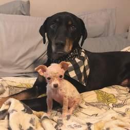 dog rescue puppy
