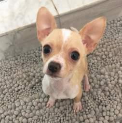 dog rescue pippa