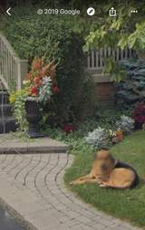 Google blurs dogs face in Street View photo