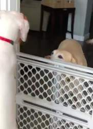 Dog is so happy to see her friend again