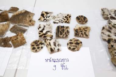 big cat skins thailand
