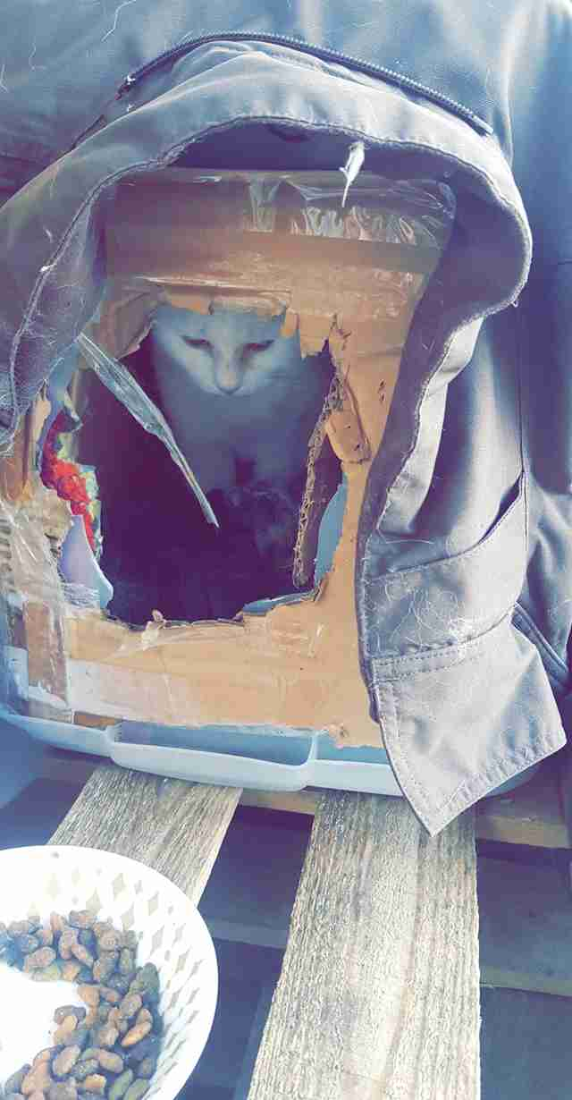 cat found in cardboard box