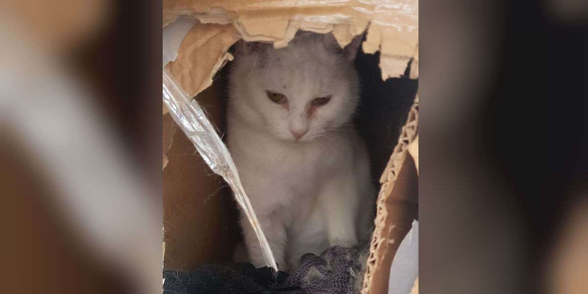 Cat Who Lived In Cardboard Box Discovers What It Feels Like To Be Cozy