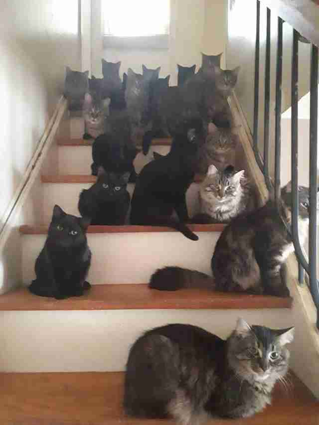 Woman Calls For Help After Her Home Becomes Totally Covered In Cats