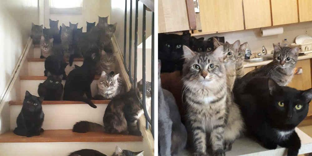 Kitties - cover