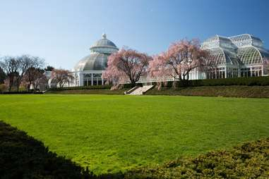 New York Botanical Garden lawn