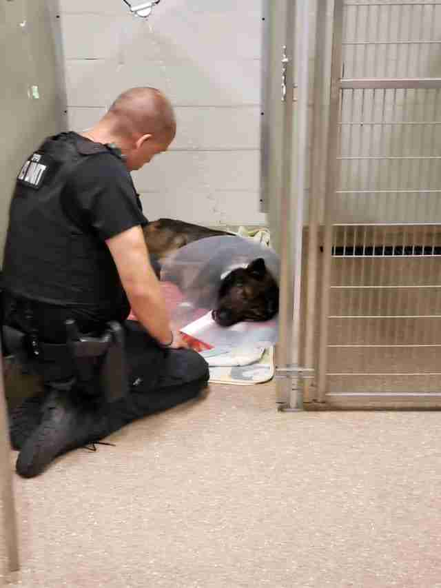 K9 Officer Shone watches over his dog Titan at the hospital