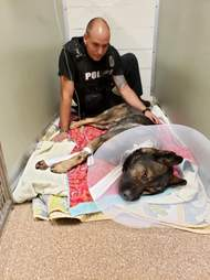 K9 officer Titan comforted by his partner