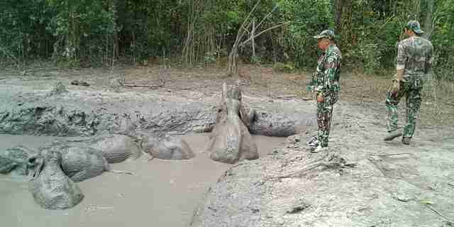 baby elephants stuck in mud