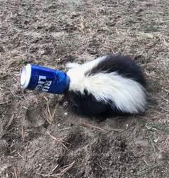 skunk rescue massachusetts