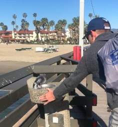 Man offers thirsty pigeon a drink