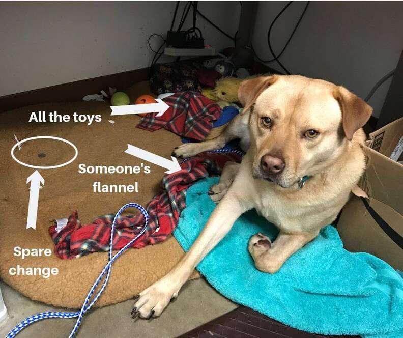 shelter dog steals