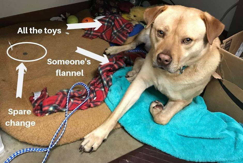 Shelter Dog Steals Everything He Can Find For The Sweetest Reason