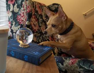 Fortune teller dog looks at crystal ball