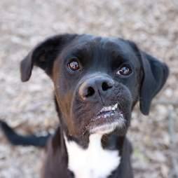 dog crooked face rescue atlanta