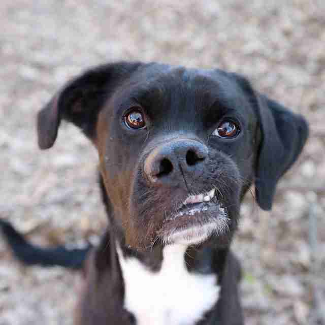 No One Wanted This Sweet Shelter Dog Just Because Of His Crooked Face