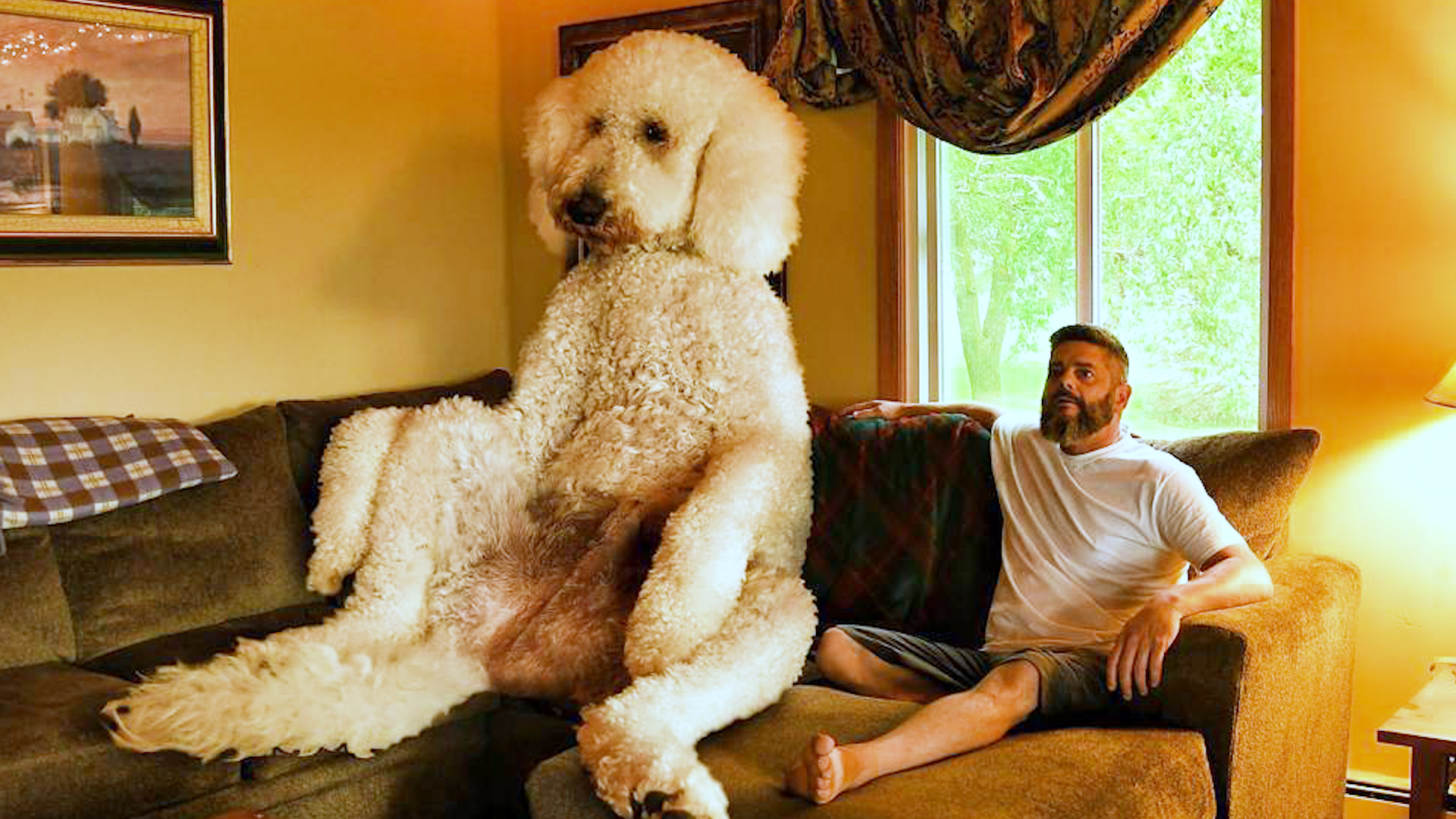 Giant Dog Weighs Over 450 Pounds