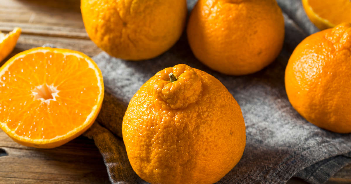 The Citrus Fruit I Will Spend Hundreds of Dollars On