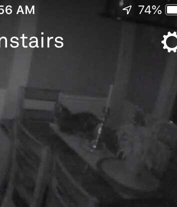 cat breaks into home