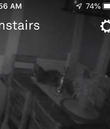 cat breaks into home