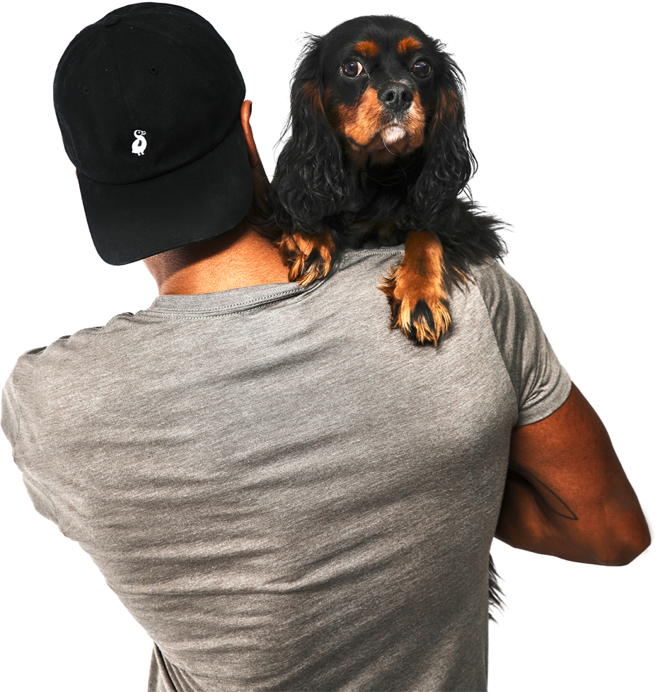 Person wearing gray t-shirt and backwards black 'Dad hat' with white logo from The Dodo shop with back to camera. The person is holding a black and tan Cavalier King Charles Spaniel over their right shoulder and the dog is looking adorably at the camera