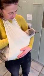 Siamese cat with arthritis in special sling