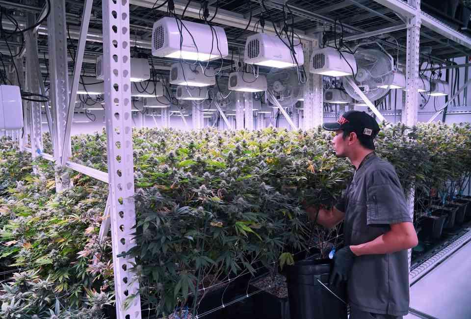 Best Dispensaries in Las Vegas: Where to Buy Legal Weed in