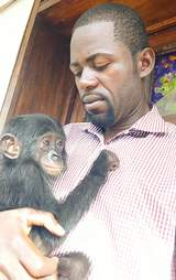 Rescuer with baby bonobo