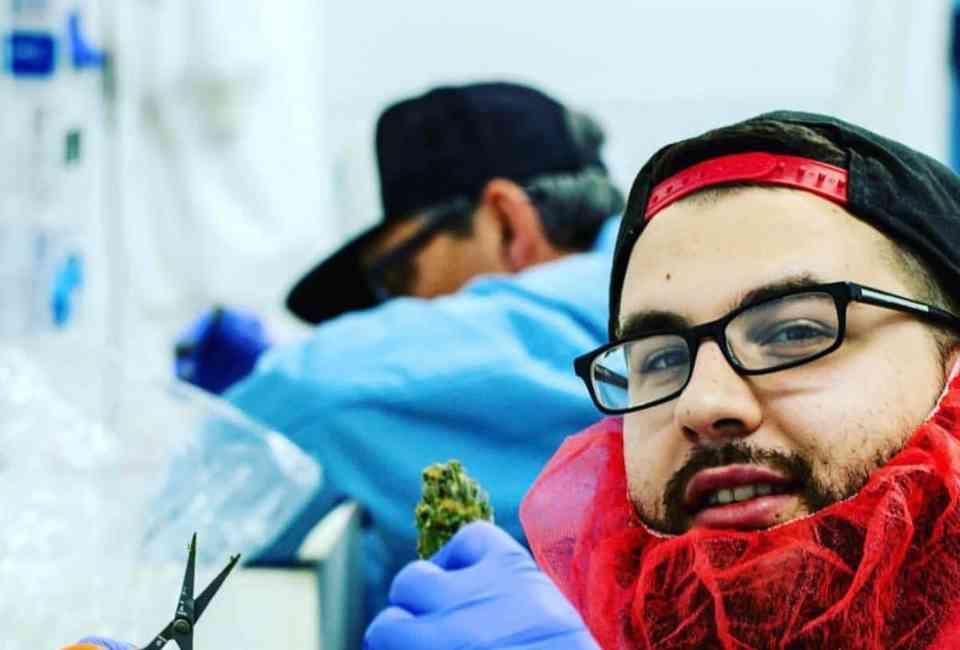 Best Recreational Marijuana Dispensaries in Massachusetts: Where to