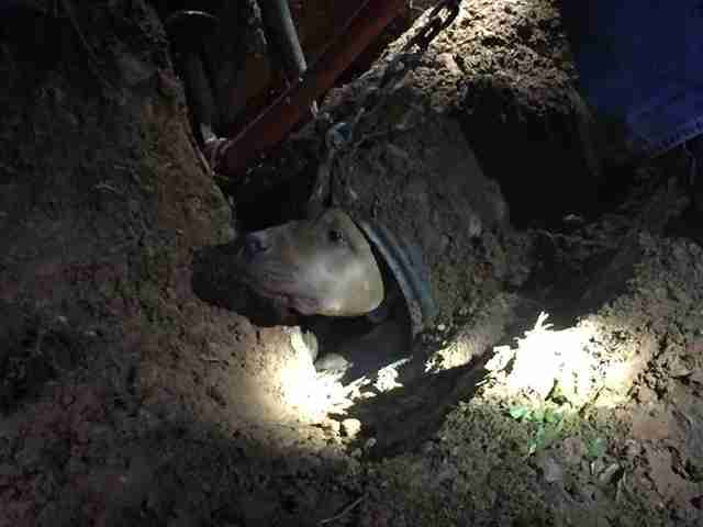 dog stuck in pipe
