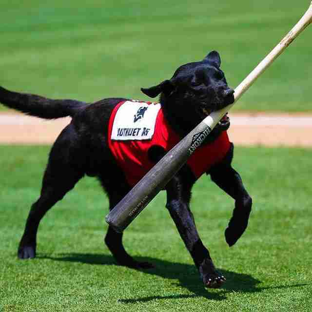 Crowd Boos Baseball Umpire For Being Rude To Adorable Bat Dog
