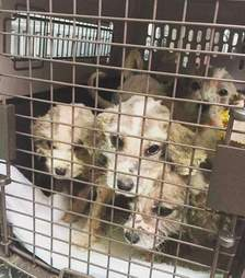tiny sick puppies rescued by SCCR