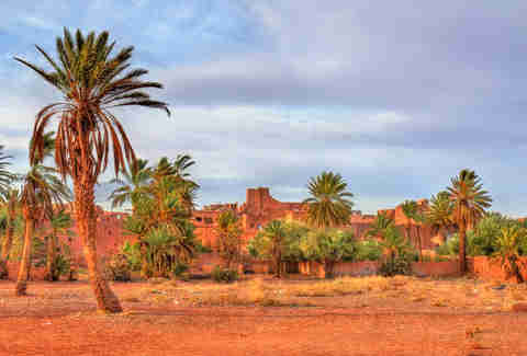Palm grove near the old town of Ouarzazate