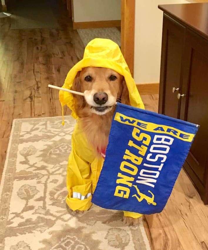 Dog cheers on Boston Marathon runners