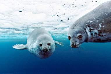 oceans disneynature