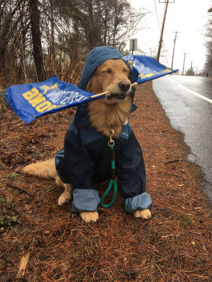 Spencer the therapy dog cheers on 2018 Boston Marathon runners