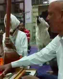 Dog who joins in temple chanting each week in India